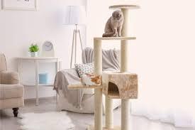 cat and cat tree