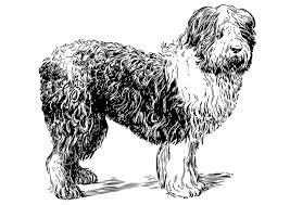 Hond Kleurplaat Huisdieren Fondos De Pantalla