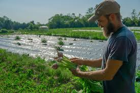 Farm2Door: Delivering Local Food To Local People | Just Sayin ...