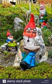 garden gnome with beard and pipe reads a book engelberg canton obwalden switzerland