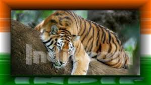 tiger the national animal of n national animal  national animal of
