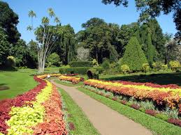 Small Picture Royal Botanical Gardens Peradeniya Wikipedia