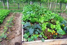 how to plan a vegetable garden the