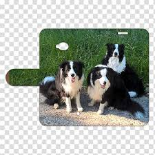 Border Collie Knitting Chart Page 20 Dog Border Transparent Background Png Cliparts
