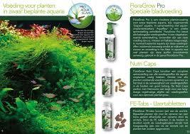 aquariumplanten voeding zelf maken