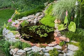 aquatic plants for ponds water