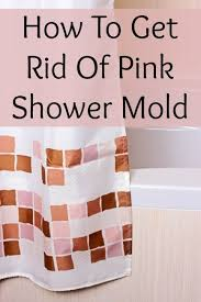 getting rid of mold in bathroom. Clean Shower Mold Getting Rid Of In Bathroom