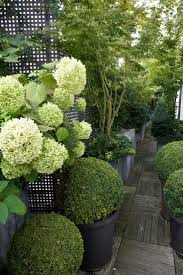 Modern Country Style: Hortensias, Topiary Y Boj In The Country Garden  Moderno Click through. Green Hydrangea.