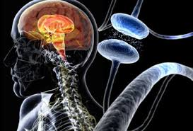 Parkinson's Disease Center: Symptoms, Treatments, Causes, Tests, Diagnosis, and Prognosis