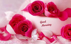 Download Romantic Roses Good Morning Hd ...