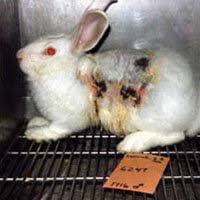 animal testing is bad science point counterpoint peta studies published in prestigious medical journals have shown time and again that animal experimentation wastes lives both animal and human and precious