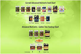 Bud Candy Feeding Chart Best Plant Food For Plants And Trees Humboldts Secret Golden Tree