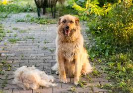 t shed large non shedding dog breeds