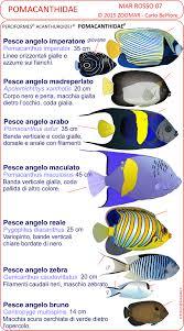 Le schede di identificazione dei pesci del mar rosso scaricabili