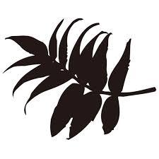 シルエット素材植物 葉っぱ 06 無料イラスト素材素材ラボ