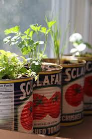plant fresh herbs and tomatoes for a
