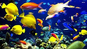 history of fish