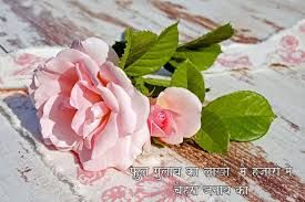 Top Rose images for whatsapp profile ...