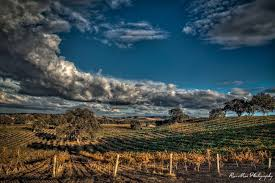 Image result for templeton gap paso robles pictures