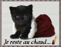 """Résultat de recherche d'images pour """"chat malade humour"""""""
