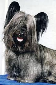 Από που προέρχεται η ονομασία του Sky Terrier;