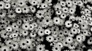 tumblr background black and white flowers. Black And White Background Tumblr Download Free Cool HD Flowers