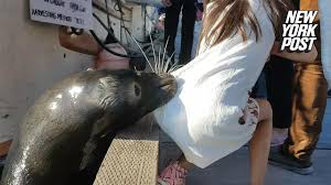 Sea lion grabs girl off pier and drags her into the water New.