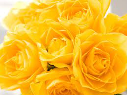 Yellow Rose Wallpapers - Top Free ...