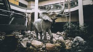 as clock winds down on burlington mall orphaned elephant petal searches for a new home