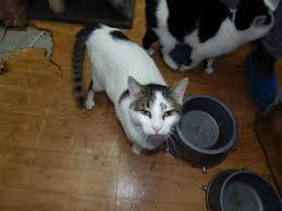 Резултат с изображение за Ветеринари: Храним котките си погрешно