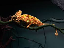 Color Changing Wallpaper Chameleon Changing Color Gif Wallpaper