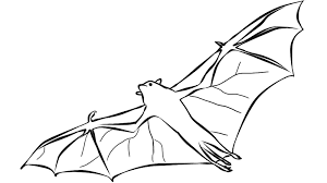 Small Picture bat coloring pages 11 ColoringPagehub