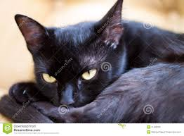 cute black cats with yellow eyes.  Cute Cute Black Cat With Yellow Eyes On Black Cats With Yellow Eyes I
