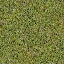 tall grass texture seamless. Ground Tall Grass Texture Seamless R
