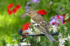 how to keep birds away from garden. Ways To Keep Birds Out Of Garden Naturals Off Your Plants Natural . How Away From