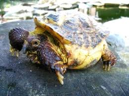 Tortoise Trust Web Feeding Your Tortoise