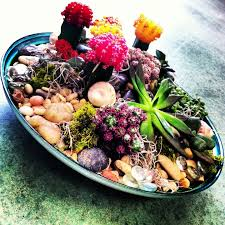 Small Picture Succulent and cacti dish garden In House Garden Design