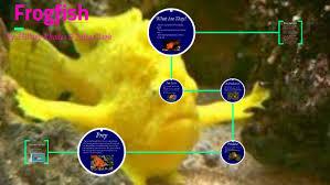 Frogfish by alia clark on Prezi Next