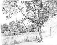 how to draw trees tutorial in graphite pencil by diane wright