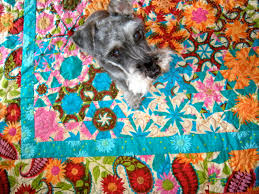 Quilts and Boxes: Floating Flowers & My mini Schnauzer named Spetter loves it every time I spread my quilt  projects out on the floor. In fact my other dog, a standard Schnauzer named  Bickel, ... Adamdwight.com