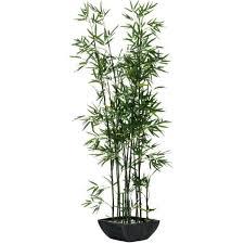 Photo Bambou En Pot