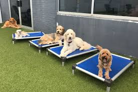 We have staff on site 24 hours a day. Pet Resort Boarding Dog Daycare In Philadelphia King Of Prussia Pa