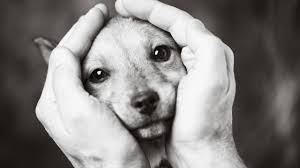 Trauer Um Tiere Wenn Der Eigene Hund Stirbt Brigittede