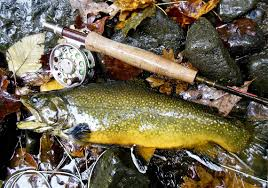 Loyalsock Creek Hatch Chart Catching Wild Trout Is A Lifelong Love For Author John