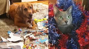 Diese Tiere Haben Ein Problem Mit Weihnachten Zett