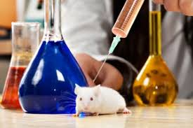 animal testing cons what every person should know