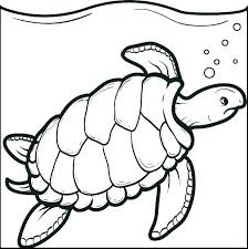 sea turtle coloring pages free ninja with pictures printable tur