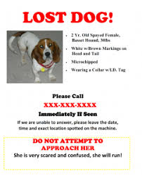 lost and found flyers found dog flyer oyle kalakaari co