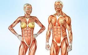 Осанка реферат по анатомии ru Лечебная гимнастика при сколиозе у взрослых