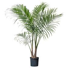 Shapely Pot Plants Also Pot Plants Decorating Plus Images About Tall  Houseplants For Full Image In